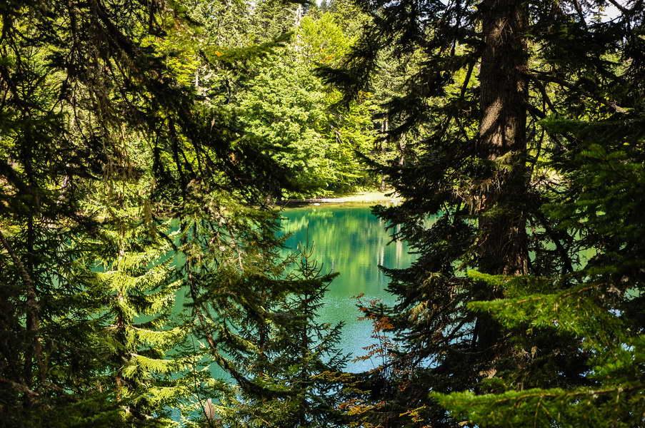 Zabojsko jezero se pomalja kroz krošnje