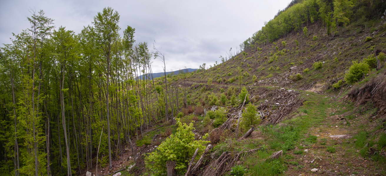 Portions of the forest were completely destroyed