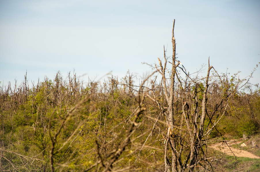 A horrific aftermath of last December\'s ice rain all over eastern Serbia