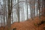 Maglena šuma