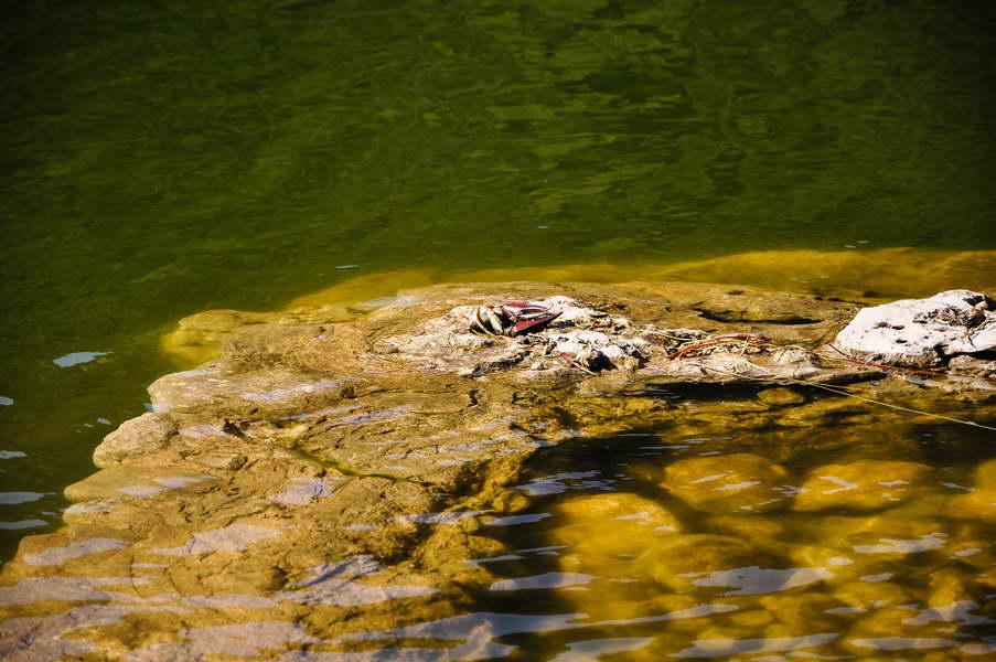 Rak u jezeru - dakle voda je čista