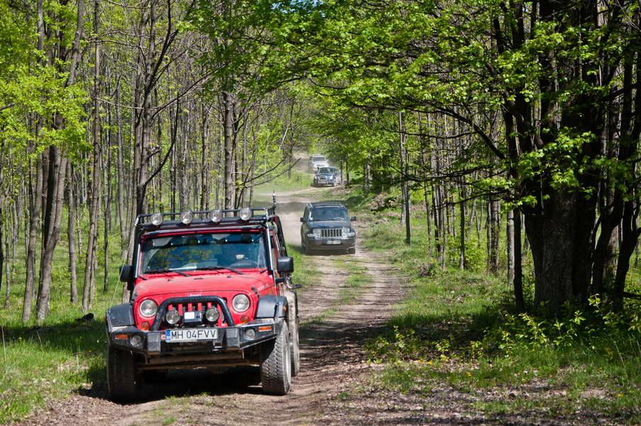 Lagano klizimo kroz prozračne prolećne šume