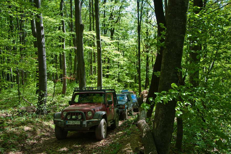 U gustoj senci šuma ovde se može provesti čitav dan...
