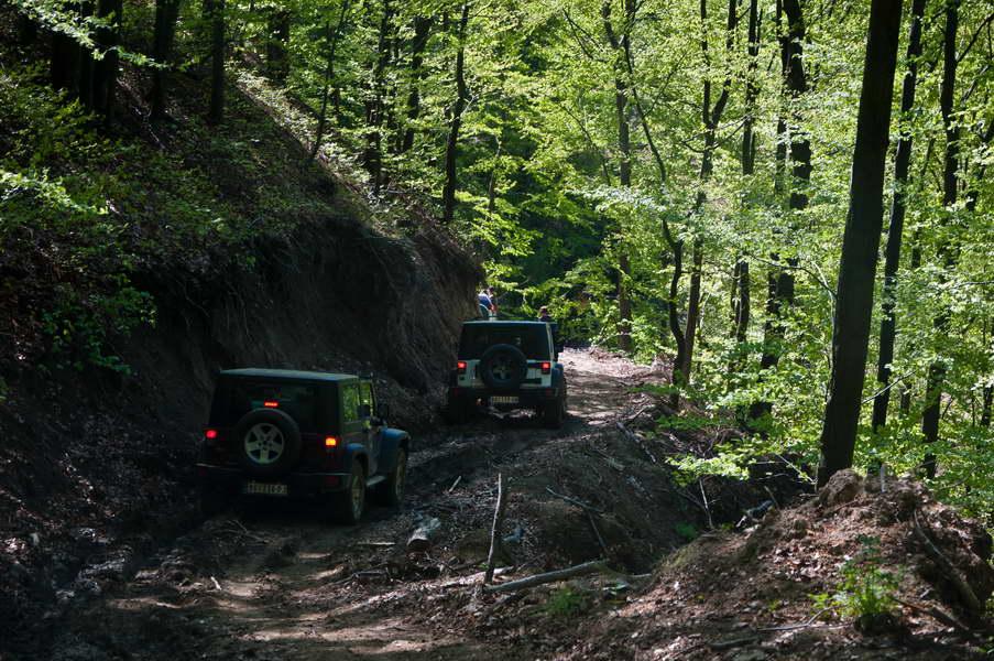U beskrajnim šumama nije lako pronaći put koji zaista nekuda vodi...