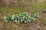 Vesnici proleća