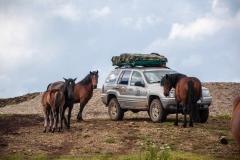 Prvi susret s divljim konjima na Stolovima