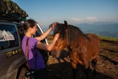 Divlji konji na Stolovima su veoma prijemčivi za kontakt