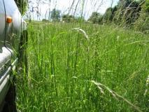 Kroz visoku travu