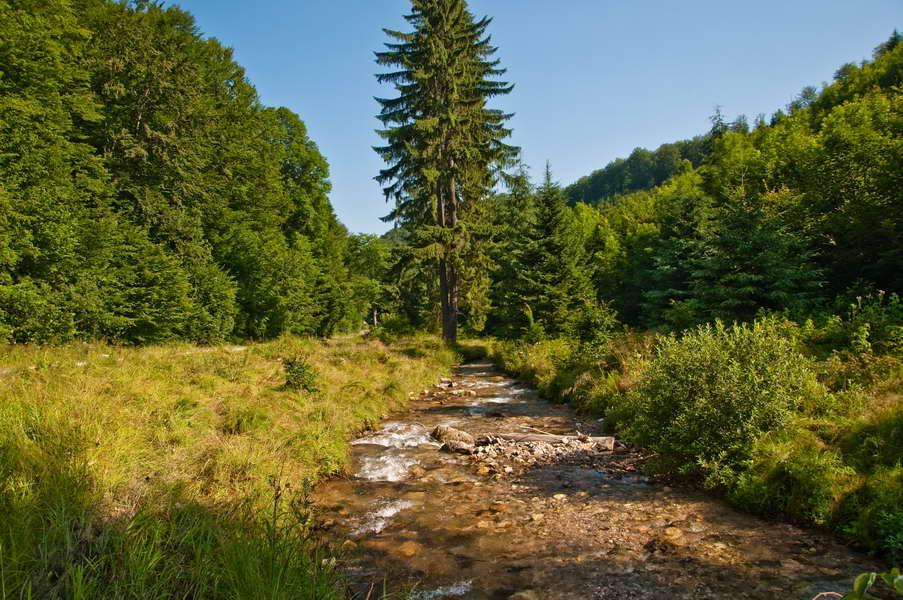 Potok u Rumuniji