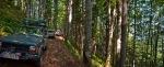 U šumama Pojane Ruskaj