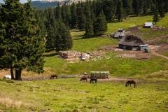 Planinsko domaćinstvo u Šurean planinama
