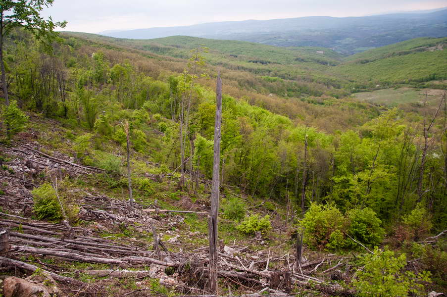 The damage we\'ve seen on Svrljiške mountains was shocking