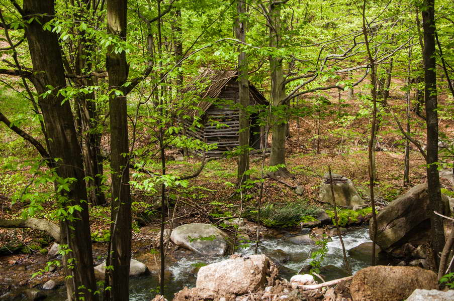 An old water mill by the black river