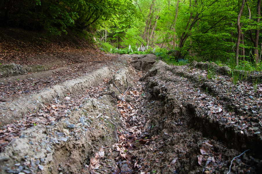 Deep ruts have destroyed many forest roads - or at least turned them into testing ground for extreme 4x4 machines
