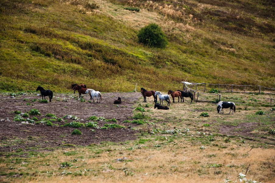 Horses high up on Stara planina