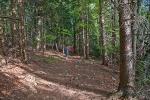 Guste šume na Tari